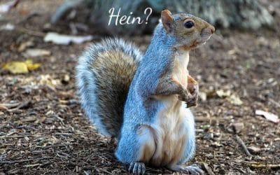 HEIN?